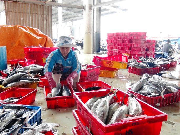 Hiện, giá loại cá này bán tại cảng là 19.000 đồng/kg, một tàu 20 tấn đem về doanh thu gần 380 triệu đồng, trừ chi phí thu lãi 220 triệu đồng