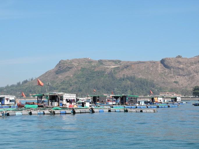 Hàng trăm lồng bè nuôi thủy sản của người dân Lý Sơn