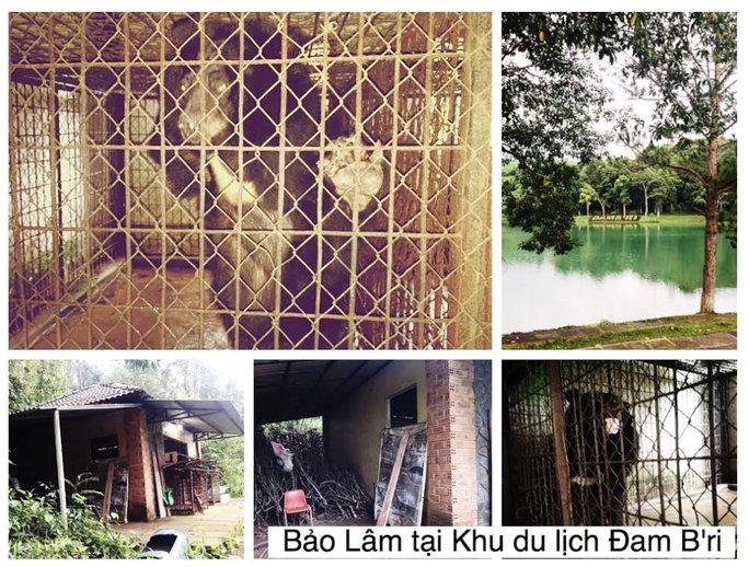 Muôi trường nuôi nhốt gấu ngựa ở KDL Đam Bri không đảm bảo