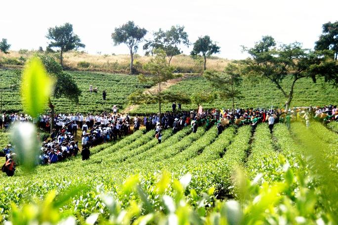 Những nông trường chè đẹp cho nguồn thu mạnh hơn 5 năm về trước.