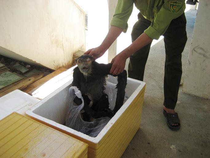 Một vụ sát hại voọc chà vá chân đen ở Khánh Hòa được phát hiện trước đây
