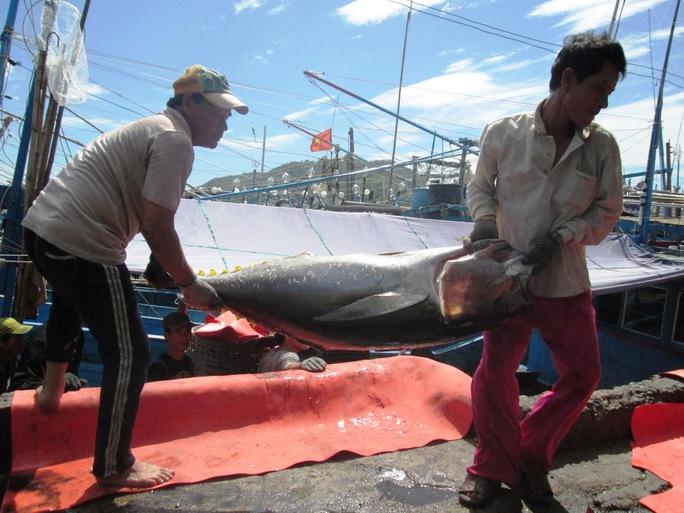 Ông Nguyễn Trung Hiếu, Trưởng Ban quản lý cảng cá Hòn Rớ và chợ cá Nam Trung Bộ, cho hay sau Tết giá hải sản tăng từ 10% - 20% nên ngư dân đua nhau ra khơi sớm, ước sẽ có khoảng 400- 500 các tàu cá ở Khánh Hòa ra khơi trong dịp đầu năm mới này