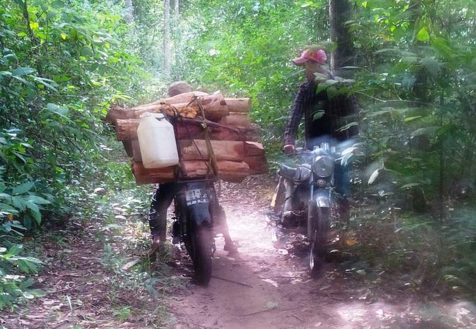 Rừng Krông Pa là điểm nóng trong tỉnh Gia Lai về việc lâm tặc phá rừng và tấn công kiểm lâm