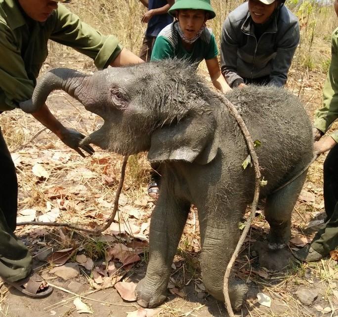 Chú voi rừng được giải cứu và thả về rừng
