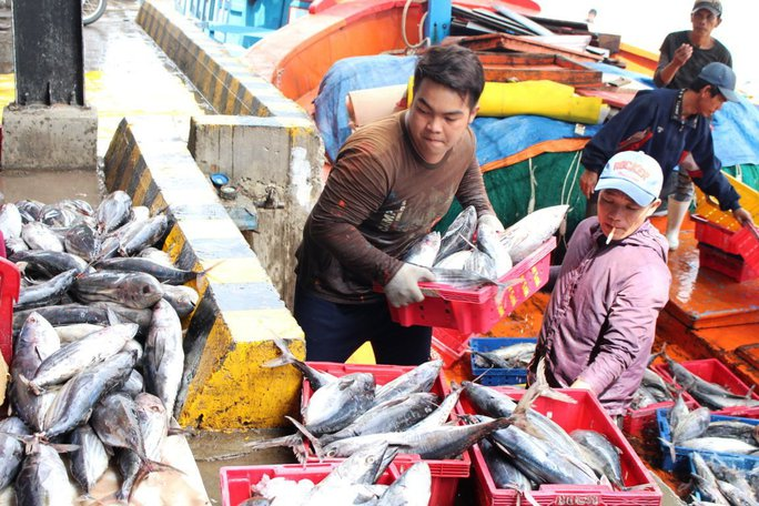 Chủ tàu KH 96596 cho biết, chuyến đi biển dịp Tết đánh bắt được gần 20 tấn cá ngừ sọc dưa, cá cờ...