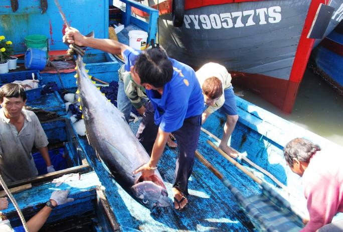 Sau tết, nhiều tàu câu cá ngừ về bến, nhưng không thể vui vì giá cá hạ