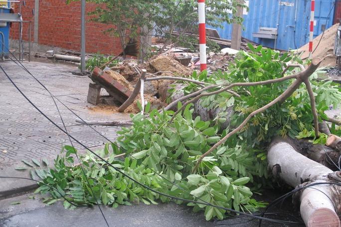 Cây xanh ở TP Đà Nẵng bị ngã đổ
