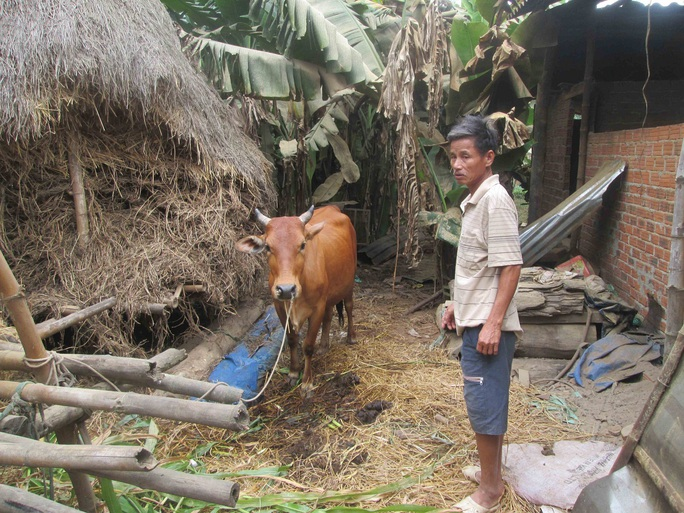 Con bò mẹ của gia đình ông Anh sinh lần thứ 2 cho ra con bê 2 đầu Ảnh: CTV