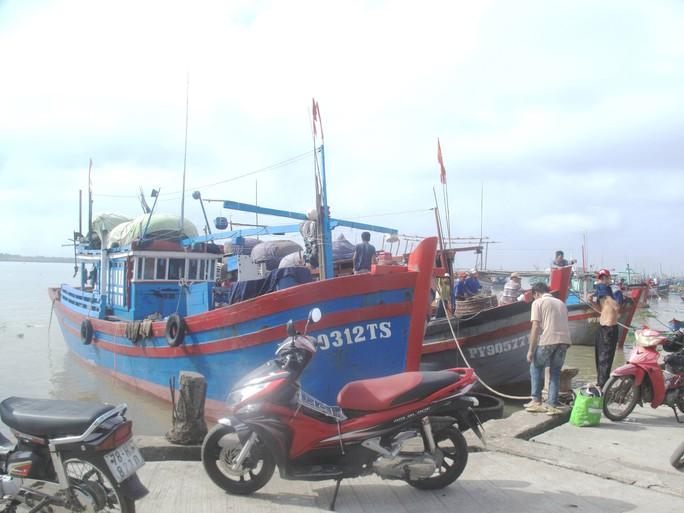 Giá thu mua cá ngừ đại dương giảm mạnh nên bến cá không còn tấp nập như trước Tết.