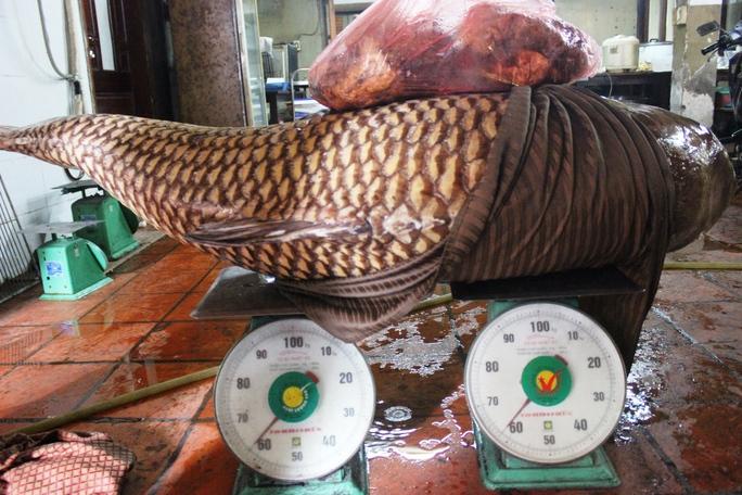Con cá hô có trọng lượng gần 130 kg