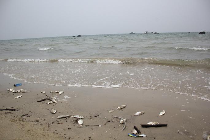 Cá chết dạt vào bờ biển Đà Nẵng khá lớn trong sáng 29-4