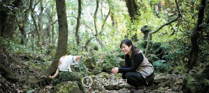Một cảnh trong rừng trên đảo Jeju Ảnh: KOREA JOONGANG DAILY