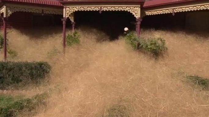 Với mỗi cơn gió đi qua, thì cỏ lăn lại xuất hiện nhiều hơn. Ảnh: 7 News