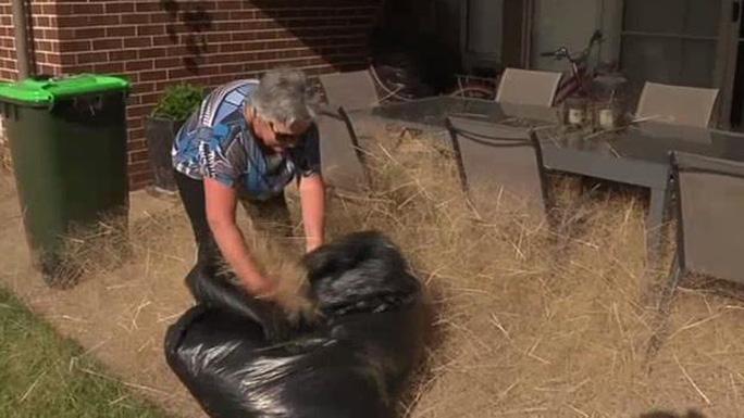 Người dân nơi đây mất nhiều giờ để dọn cỏ lăn. Ảnh: 7 News