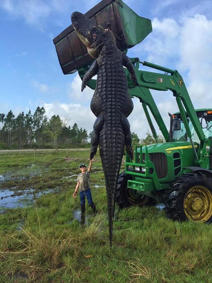 Nín thở với con cá sấu khổng lồ. Ảnh: Outwest Farms