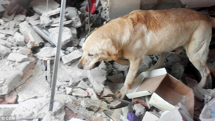 Nhiệt độ cao, mất nước và mất sức trong công tác cứu hộ đã khiến Dayko gục ngã. Ảnh: CEN