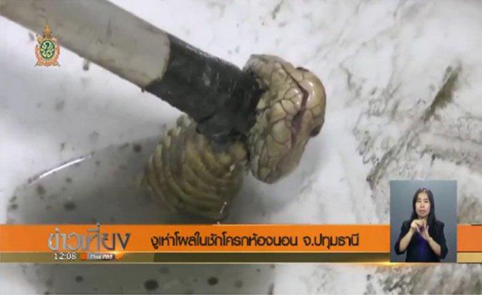 Các nhân viên cứu hộ đổ thuốc trừ sâu vào bồn vệ sinh để con rắn ngoi lên. Ảnh: THAI PBS