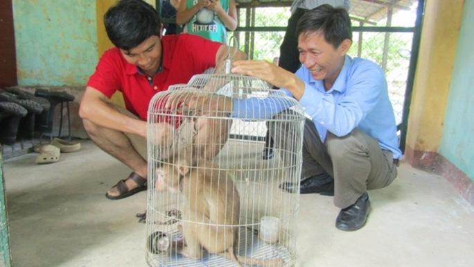 Cá thể Khỉ đang được chăm óc để thả lại rừng