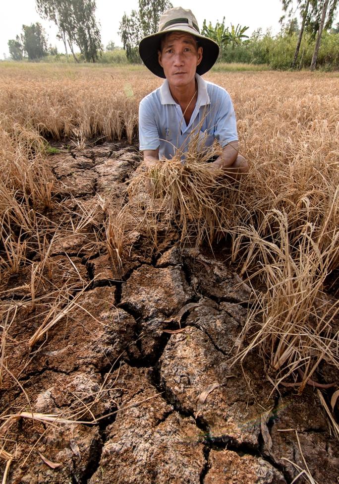 Lúa chết khô, đất nứt nẻ là những gì đang diễn ra trên nhiều cánh đồng của người dân huyện An Biên