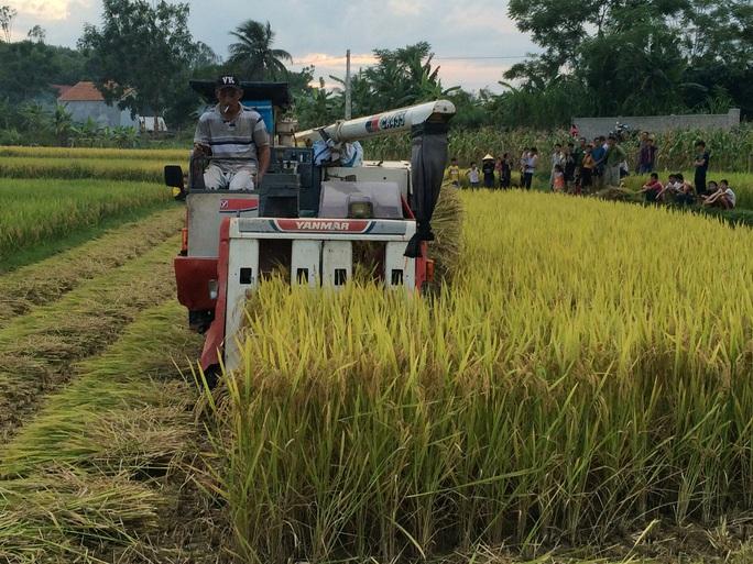 Muốn hoạt động, các chủ máy gặt phải nộp cho xã Bắc Thành 2 triệu đồng để lo công tác an ninh