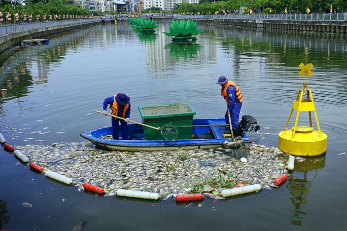 Lực lượng công nhân môi trường gồm: 54 canô, tàu với 250 công nhân được huy động hoạt động cả ngày lẫn đêm để thu gom xác cá để giữ vệ sinh môi trường.