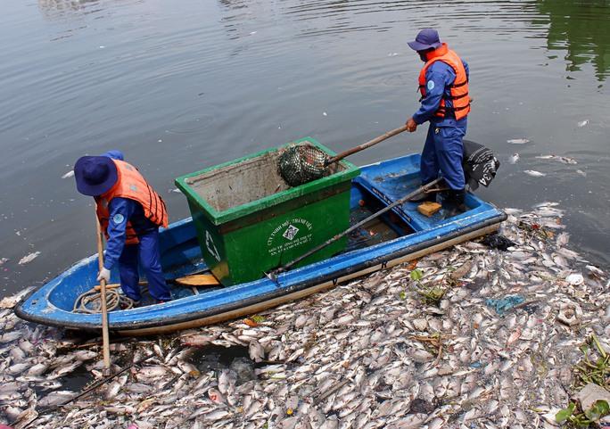 Các công nhân môi trường đã thu gom hơn 70 tấn cá chết tại kênh Nhiêu Lộc - Thị Nghè.