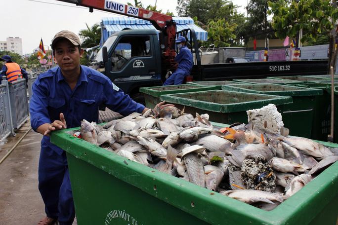 Những thùng cá với số lượng hàng trăm kg liên tục được đưa lên bờ. Các công nhân cho biết, so với việc vớt rác và lục bình, vớt cá chết cực hơn nhiều vì chúng nằm rải rác, vừa nặng lại vừa bốc mùi hôi thối.