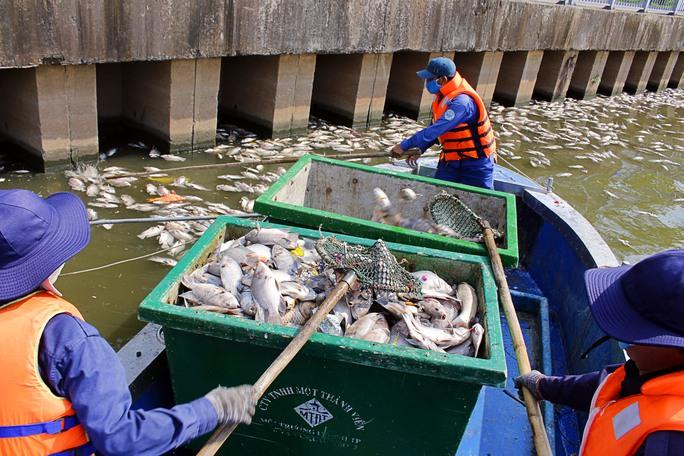 Chiều 18-5, các công nhân vẫn tích cực thu gom xác cá chết. Theo ghi nhận của phóng viên xác cá nổi lên đã được vớt gần hết, chỉ còn tập trung nhiều ở khu vực đầu nguồn dòng kênh.