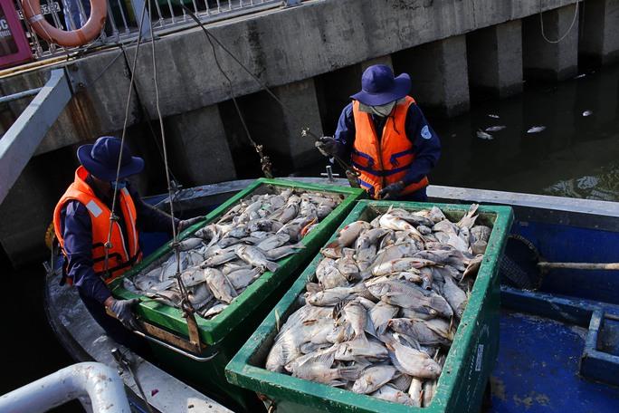 Cần cẩu cũng phải hoạt động liên tục để chuyển xác cá từ ca nô lên bờ xử lý.