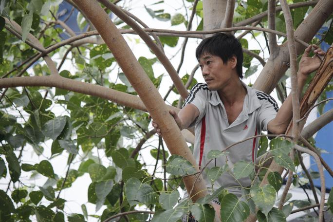 Thậm chí có người còn trèo lên cây để quan sát được rõ hơn.