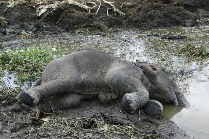 Chỉ trong vòng 2 tháng đã phát hiện 2 con voi rừng chết