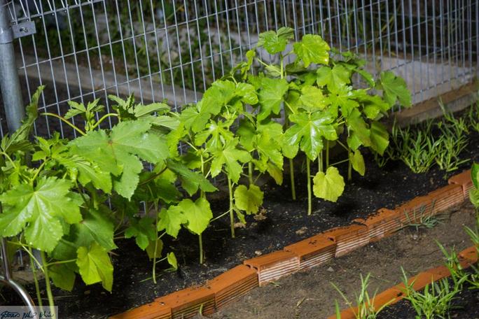 4 tháng rồi cây cối, rau quả ở Bình Dương mới được tắm mưa