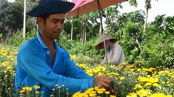 Người trồng hoa ở Sa Đéc trúng lớn trong dịp Tết Đoan Ngọ năm nay