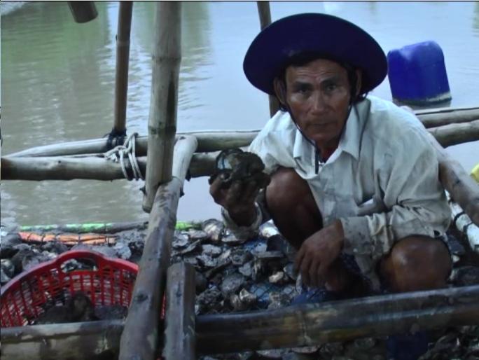 Vớt hàu chết dưới kênh đem về phơi khô để tránh ô nhiễm môi trường