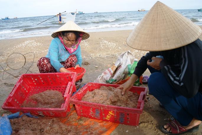 Ngư dân Quảng Bình hối hả thu hoạch ruốc biển