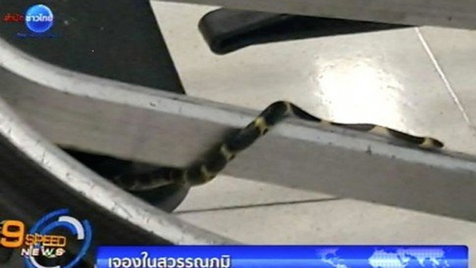 Con rắn trên xe đẩy hành lý. Ảnh: SCMP