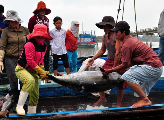 Nhiều ngư dân Quảng Ngãi lo lắng vì cá đánh bắt được không có người mua hoặc mua với giá rất thấpẢnh: TỬ TRỰC