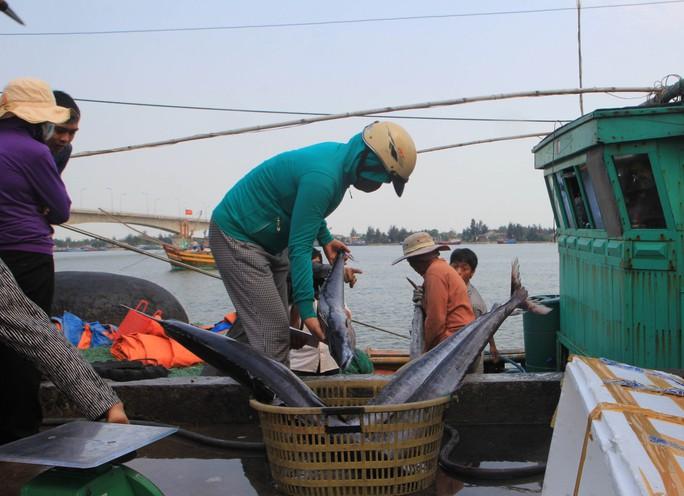 Nhiều tàu cá đánh bắt xa bờ của ngư dân Quảng Ngãi trở về đã bán được cá. Ảnh: Tử Trực