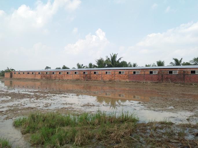 Nguồn nước bơm từ trại nuôi heo gây ô nhiễm môi trường xung quanh
