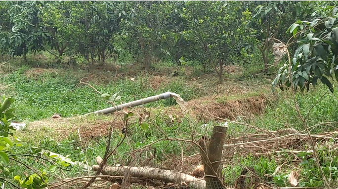 Trang trại nuôi heo dùng ống bơm nước thải ra môi trường