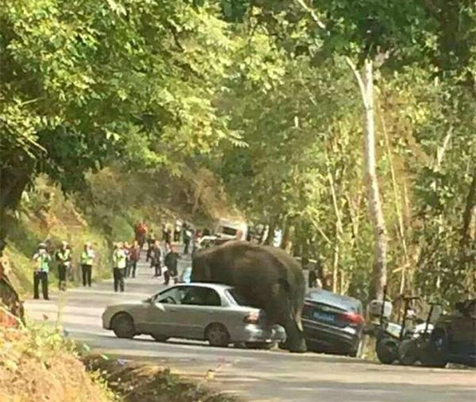 """Thất tình, voi đập phá 15 chiếc xe để """"giải khuây"""""""
