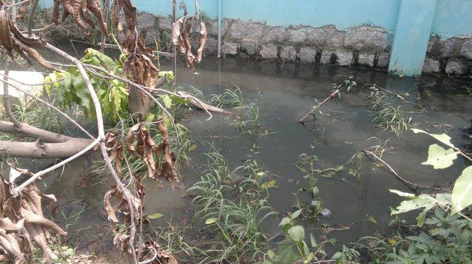 Nước thải ra môi trường của Công ty Việt Thái đen ngòm, bốc mùi hôi thối nồng nặc (Ảnh: Nam Phong)