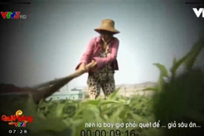 Bà T.T.D., người dùng chổi quét rau cho rách giả vết cắn của sâu, trong phóng sự của VTV cho biết được phóng viên VTV nhờ làm việc này - Ảnh chụp màn hình