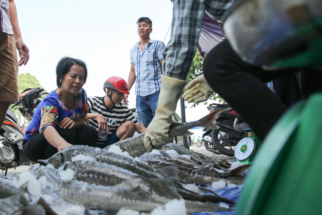 Người dân TP HCM chen nhau mua cá tầm bị ngộp nước - Ảnh 11.