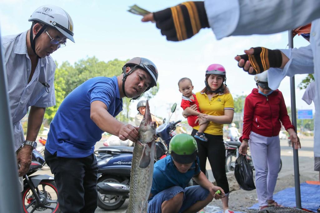 Người dân TP HCM chen nhau mua cá tầm bị ngộp nước - Ảnh 10.