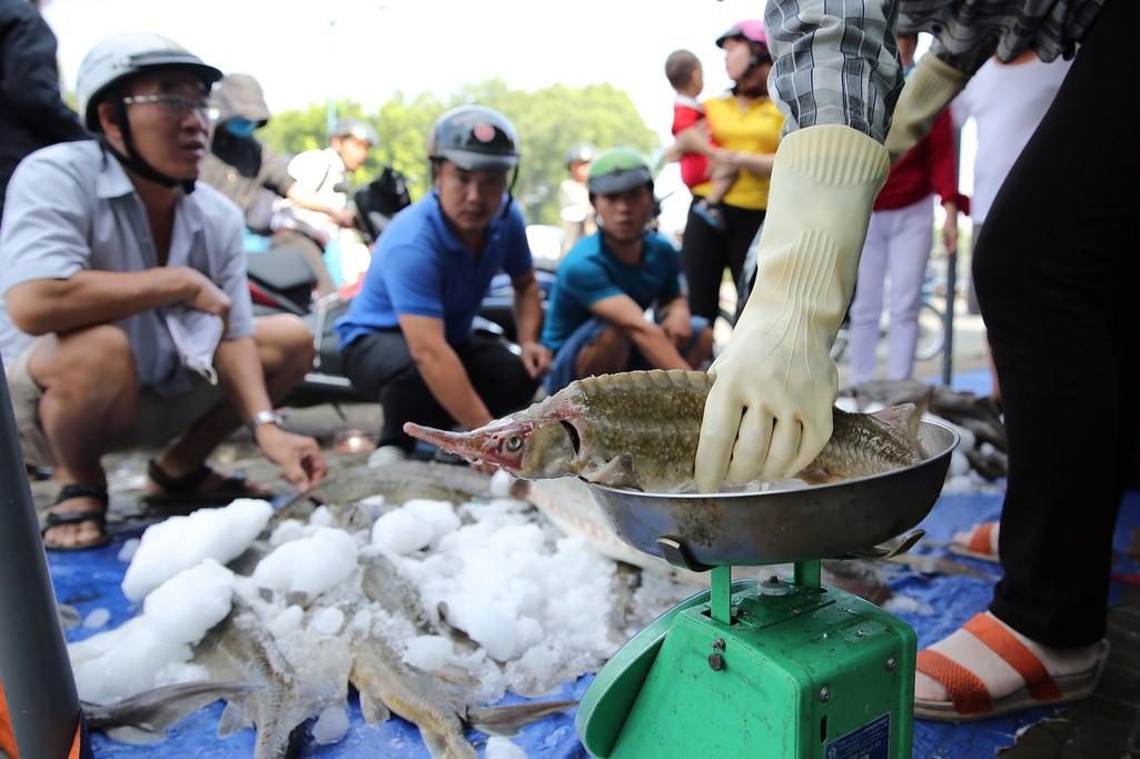 Người dân TP HCM chen nhau mua cá tầm bị ngộp nước - Ảnh 7.
