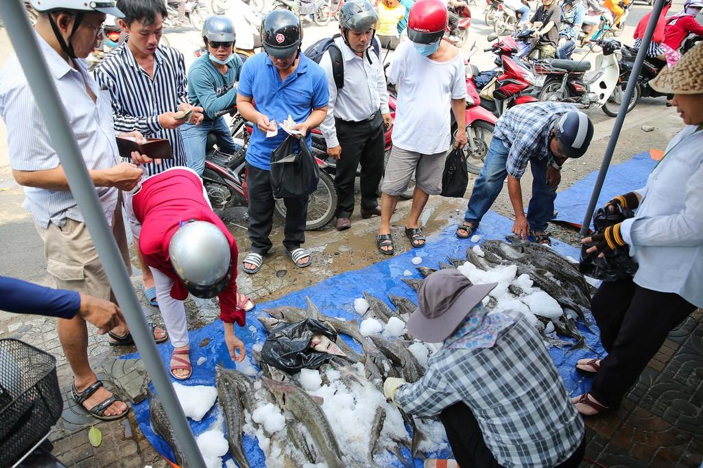 Người dân TP HCM chen nhau mua cá tầm bị ngộp nước - Ảnh 9.