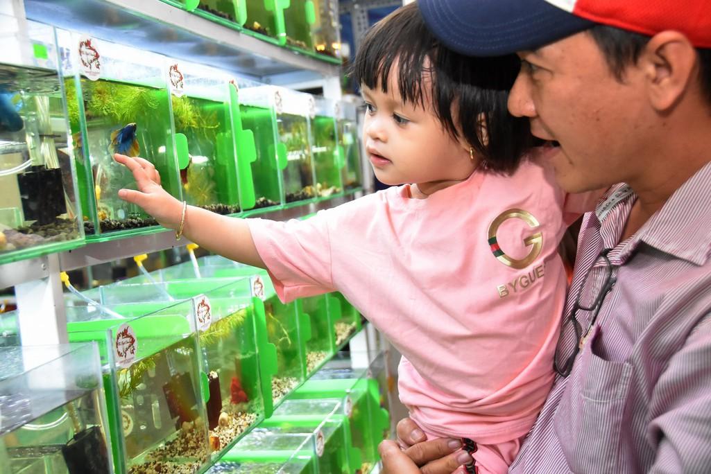Cả trăm loài cá cảnh đủ sắc màu hút hồn dân chơi thủy sinh ở TP HCM - Ảnh 2.