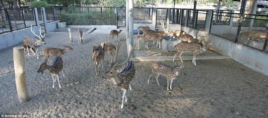 Cận cảnh sở thú tàn độc nhất thế giới