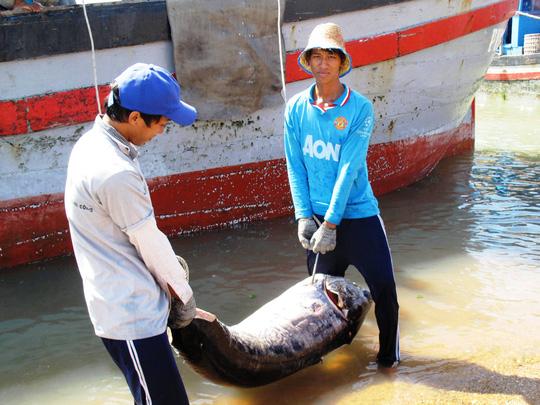 Một con cá cờ lớn vừa được ngư dân đưa về bến